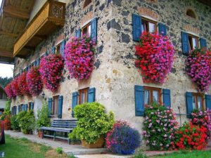 gerani-parigini-fiori-da-balcone-pendenti-italianlovers.eu-2018